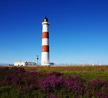 Tarbat Ness Lighthouse Purple Heather by Richard Hanley www.scotland-postcards.com