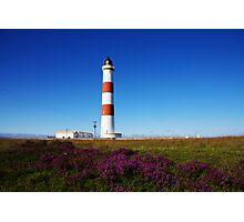 Tarbat Ness Lighthouse Purple Heather Photographic Print