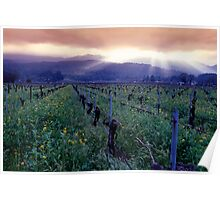 Spring Sunset Over Napa Valley Poster