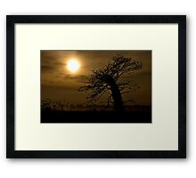 Tree by Carol Sue Framed Print