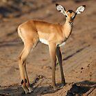 Baby Impala by Rebecca Conroy