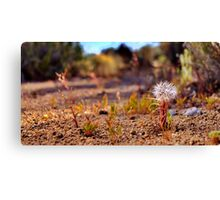 Wild flowers - The Loner Canvas Print