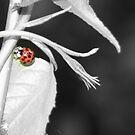 Ladybug by Heather Rampino