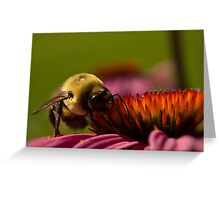 hungry bumblbee Greeting Card