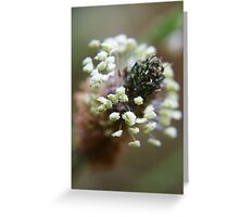 White wreath (from wild flowers collection)  Greeting Card