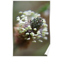White wreath (from wild flowers collection)  Poster