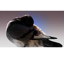 pigeon shy Photographic Print