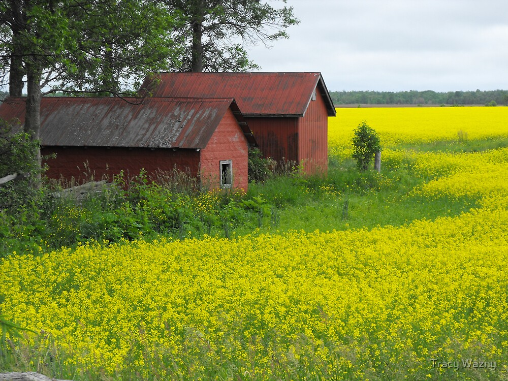 Red Sheds, Yellow Fields by Tracy Faught