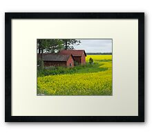 Red Sheds, Yellow Fields Framed Print