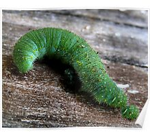 The Inquisitive Caterpillar Poster