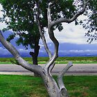 Old Tree by R&PChristianDesign &Photography