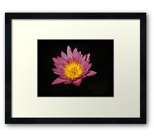 The Water Garden ~ Part Two Framed Print