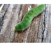 Rusty The Caterpillar Photographic Print
