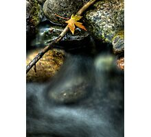 Septembers Meander Photographic Print