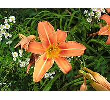 Orange Day Lily in my Garden Photographic Print