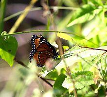Butterfly Wonders by hmclark