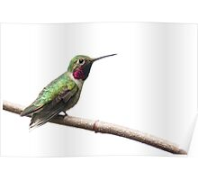 Hummingbird on Mother's Day Poster