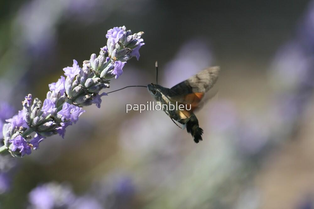 Nectar Collector by Pamela Jayne Smith