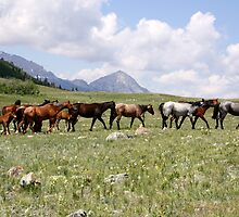 Home on the Range by Kimberly Palmer