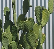 Cactus and Corrugated Tin by Michael Cohen