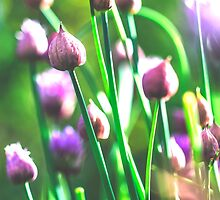 Chive Bouquet II by ghd-photography