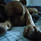 Sleepy pup by Kerplunk409