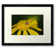 It's a big world for a small guy Framed Print