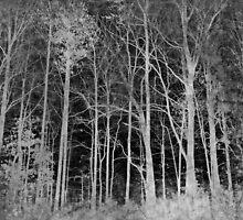In the dark of the night by Scott Mitchell