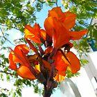 Orange Flower by Meg Andrews