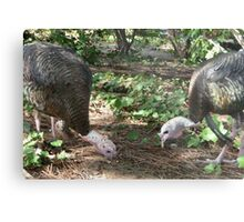 Timing turkeys is tough Metal Print
