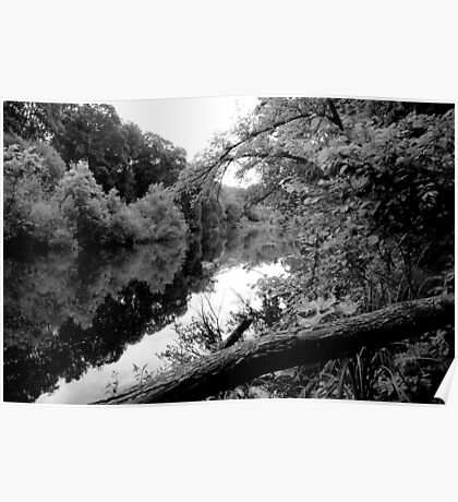 River and trees. Poster