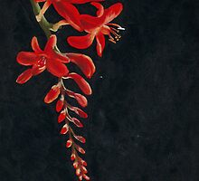 Red Flowers by A Leung