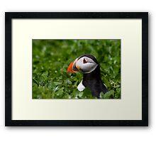 Puffin in Greenery Framed Print