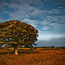 Purbecks Tree by steffen