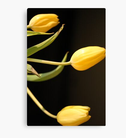 Tulip Three Canvas Print