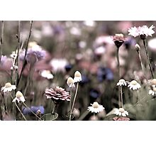 Too much flowers Photographic Print