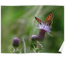 Female Small Copper 01 Poster