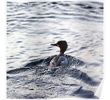 Canvasback Duck Face Camo  Poster