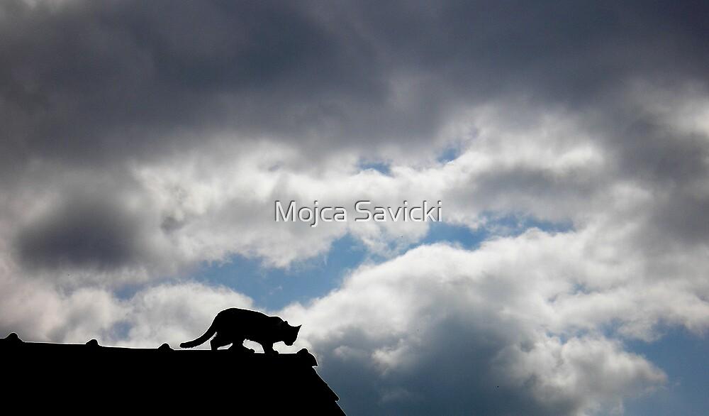 Observation Point by Mojca Savicki
