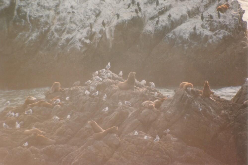 Seal Rock by dbronco928