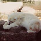 Sleeping Polar Bear by dbronco928