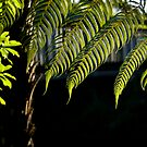 Fern Tree leafs by yurix