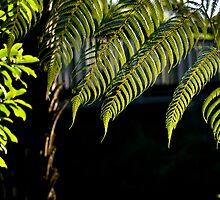 Fern Tree leafs by yurix