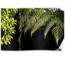 Fern Tree leafs Poster