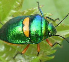 harlequin beetle by poshbeads