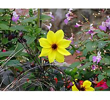 Carmel Yellow Photographic Print