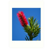 red bottle brush  Art Print
