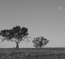 Dry Plains Trees by tallboy
