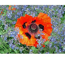 Poppy in Blue Photographic Print