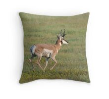 North American Pronghorn (Antelope) Throw Pillow